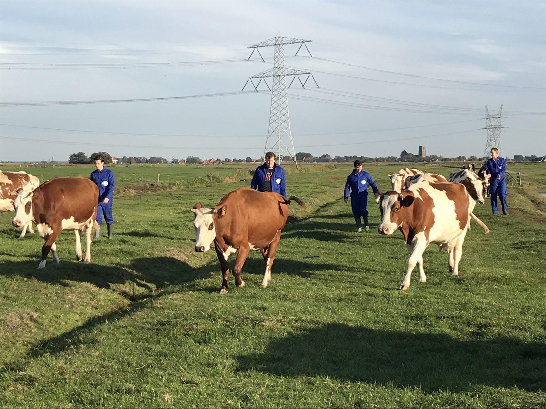 Workshop Koeien melken