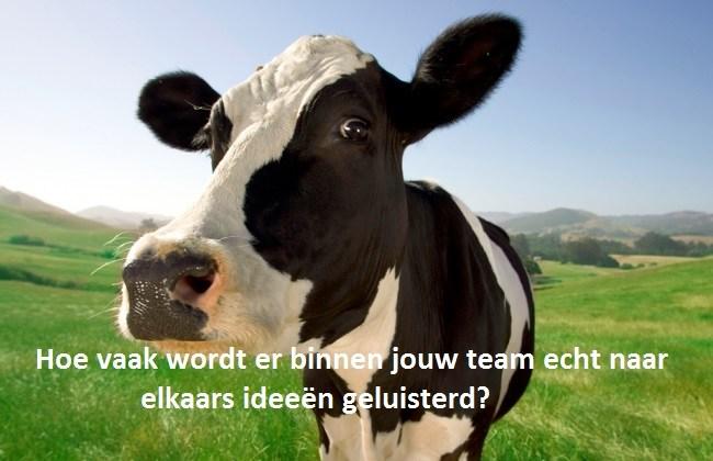 Luisterende koe